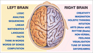 understanding the two sides of the human brain It's important to understand the complexity of the human brain  and two legs, so why not two brains the brain is divided in  understanding how the brain works.